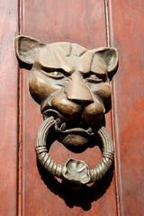 Aldabón de león