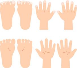 手と足、手の甲・手のひら、足の甲・足の裏