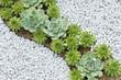 succulent plant - 80708608