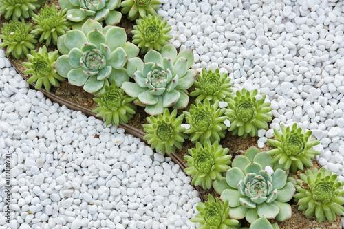 Fotobehang Cactus succulent plant