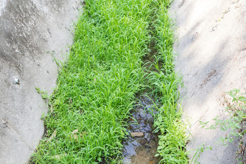 Grass in old drainage channel