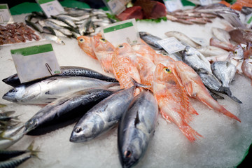 Fresh fish lies on a counter of shop in fish market