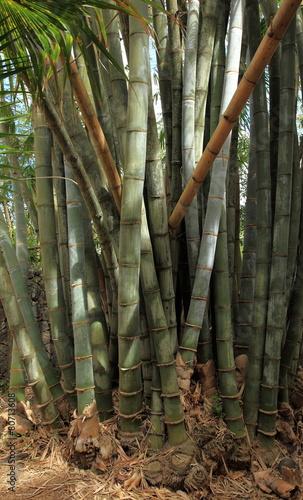Fotobehang Bamboo tronc de bambous géants
