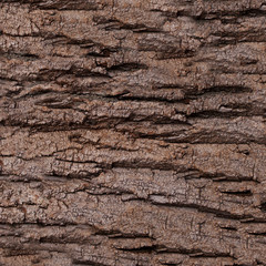 Texture - a bark of an old oak. Wood Tree Background Pattern