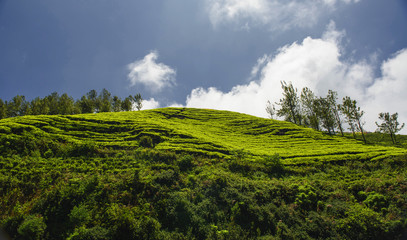 Agricultural land in Ooty (Nilgiris), Tamilnadu, India