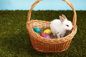 Little fluffy white Easter bunny sitting in basket color eggs