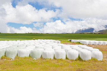 fourrage en balles, Plaine de Cafres, Réunion