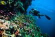 diver photo video seafan kapoposang indonesia scuba diving - 80721408