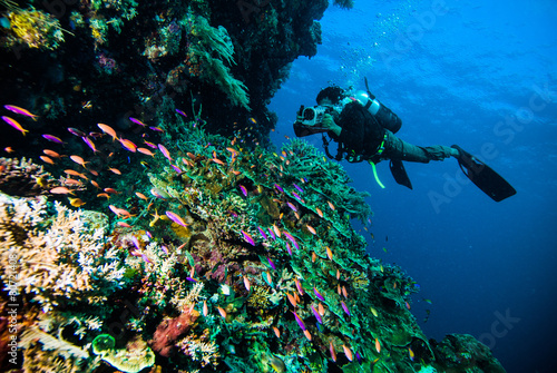 Tuinposter Duiken diver photo video seafan kapoposang indonesia scuba diving
