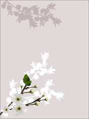 light  spring tree blossoming on grey background