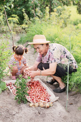 grandmother and granddaughter to harvest onions