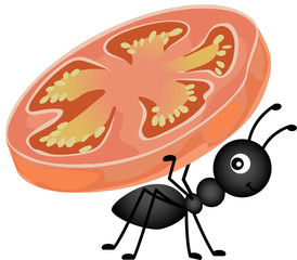 Ant carrying a slice tomato