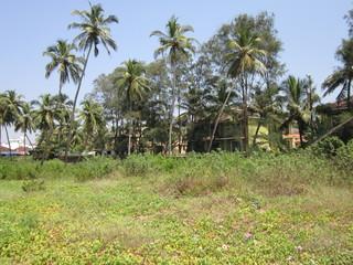 пальмы в Индии