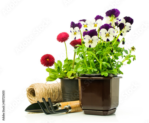 Canvas Pansies Pansies and daisies in pots with garden tools