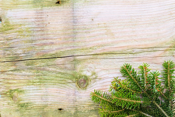 Fir branch with vintage wall