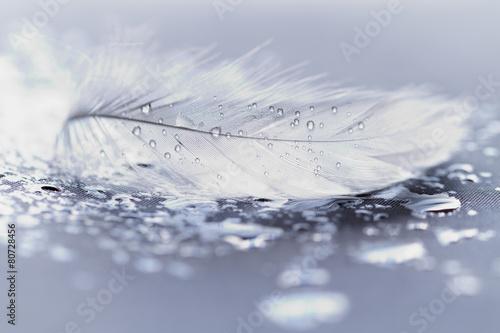 Zdjęcia na płótnie, fototapety, obrazy : White feather with water drops