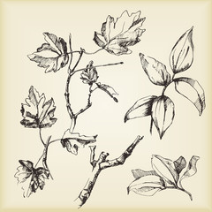 Hand-drawn sketches of plants. Vector elements