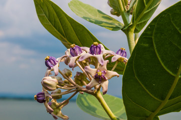 Green leaves (Plumeria). with sky background.