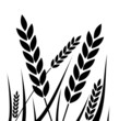 Agricultural - wheat icon - Illustration - 80736053