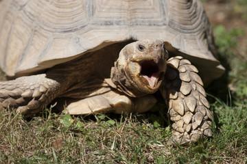 tortoise at zoo