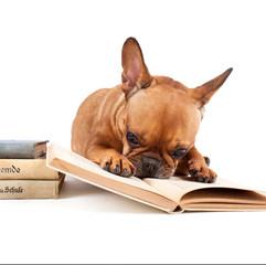 Nase in die Bücher stecken