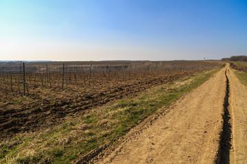 country road through a plantation of grape-vine