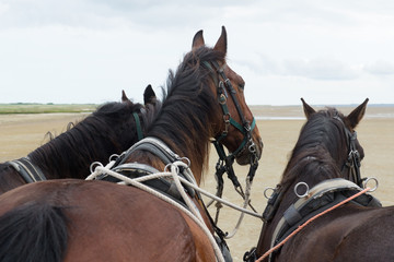Horses with tilt car at the coast