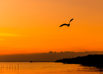Silhouette of the seagull fly on the sky at sunset in Bang Pu, T