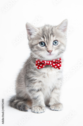 Staande foto Kat Grey kitten with a bow tie
