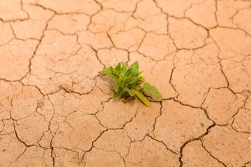 Pflanze auf kargem Wüstenboden