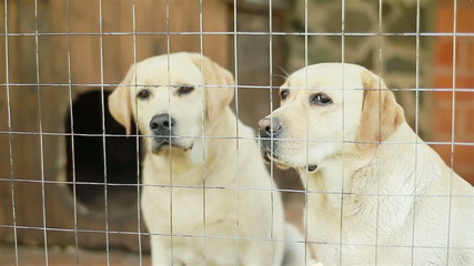 Two dogs behind fence of the cage