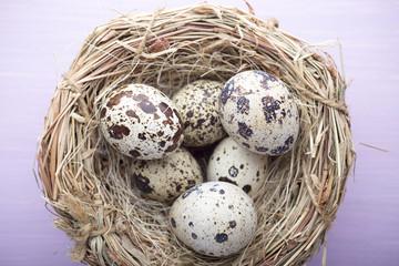 Quail eggs. Easter greeting card.