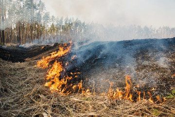 Fire on agricultural land near forest.