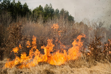 Fire on agricultural land near forest