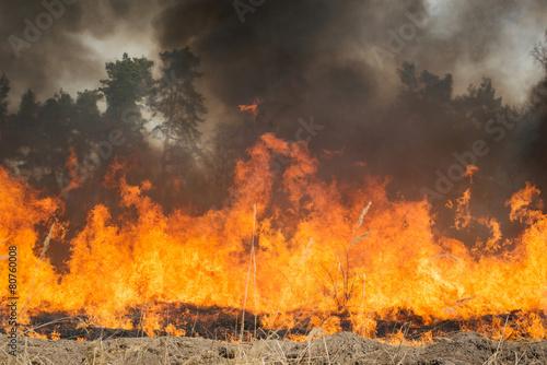 Leinwandbild Motiv Big fire on agricultural land near forest