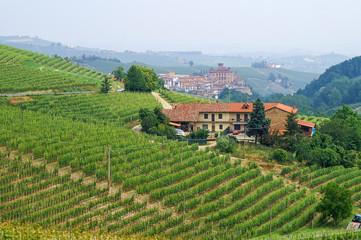 Weinberge im Piemont mit Blick auf das Städtchen Barolo
