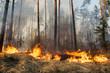 Leinwandbild Motiv Forest fire in progress