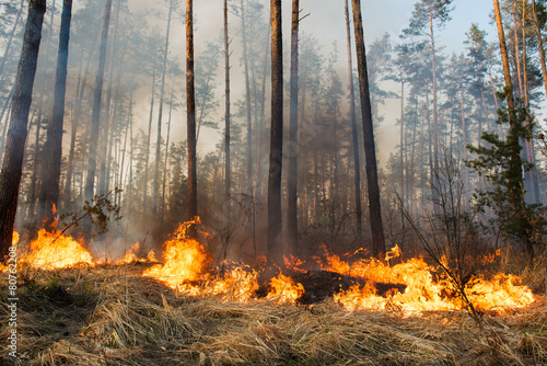 Forest fire in progress - 80762208
