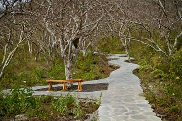 Hiking path in San Cristobal Island, Galapagos