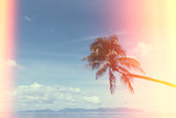 Palm tree on tropical shore, vintage stylized with light leaks