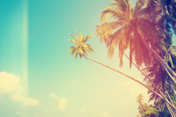Vintage stylized tropical palm trees on the shore