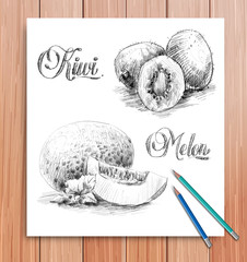 Vector realistic sketch of fruits kiwi and melon.