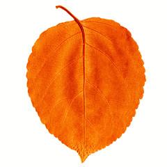 Оранжевый лист дерева