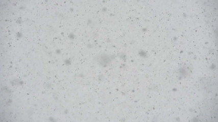 Large Flakes of Snow