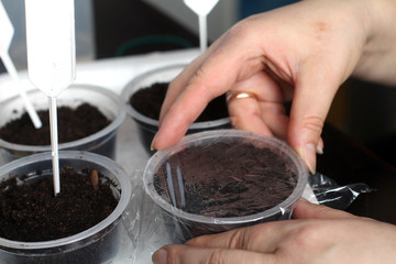 Planting seeds. cover cellophane