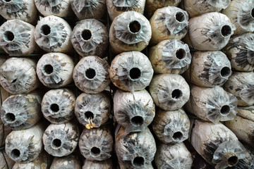 Row of Abandoned Spore Bag in mushroom house
