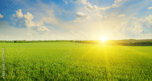 field, sunrise and blue sky - 80778668