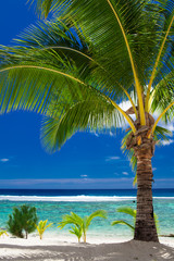 A palm tree overlooking tropical beach on Roratonga, Cook Island