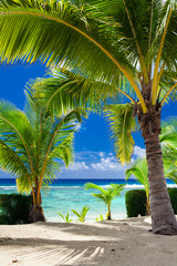 Few palm trees overlooking tropical beach on Cook Islands