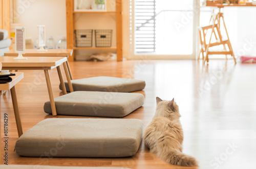 黄昏る家猫